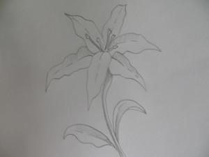 Вот такую лилию мы будем рисовать