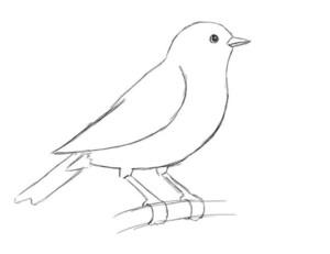 простой рисунок птицы