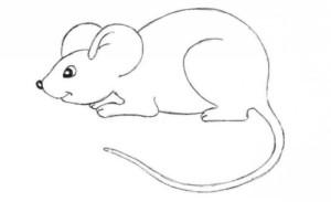 рисунок мыши карандашем