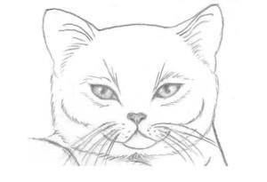 рисунок кошки карандашем