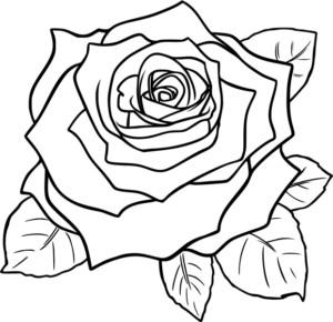 роза карандашем