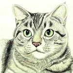 рисунок кота урок изо в 5 классе