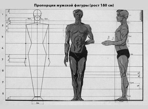 пропорции фигуры мужской