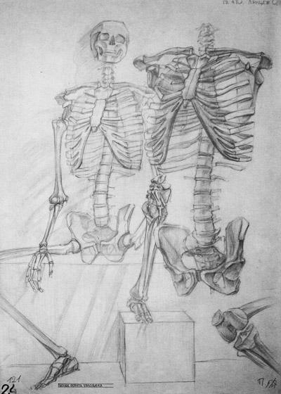 рисунок скелета человека