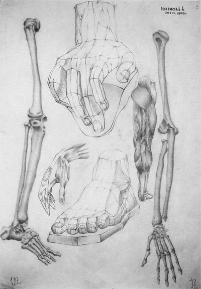 рисунок гипсовых слепков фигуры человека
