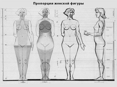 пропорции фигуры женской