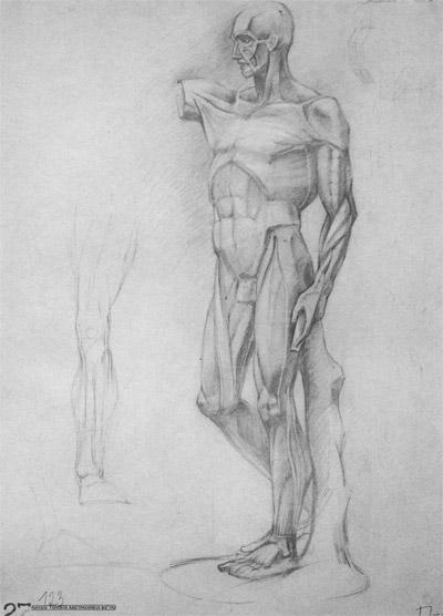 рисунок анатомической фигуры человека