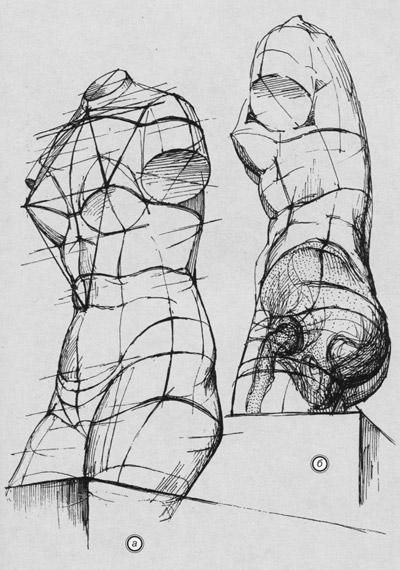 рисунок фигуры женской